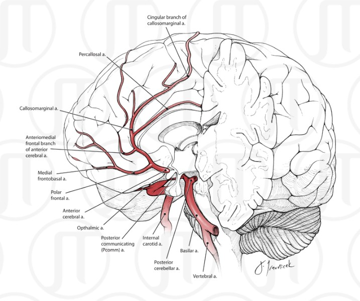 General Arterial Supply for the Brain